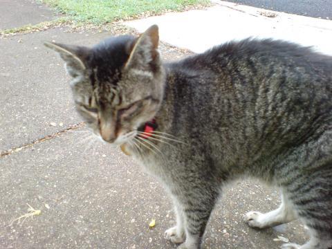 ご近所猫1