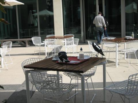 パーラメントハウスのカフェ4