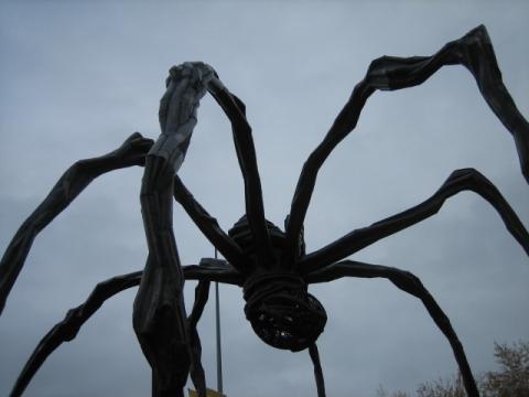 TATE クモ