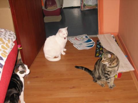 日本カモシカ家のネコたち