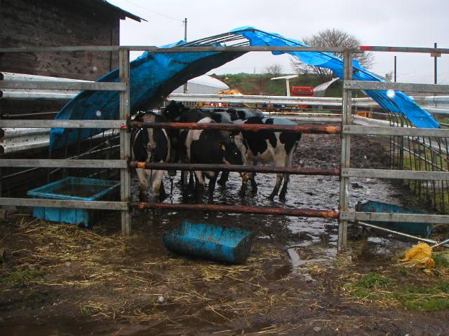 牛は無事でした