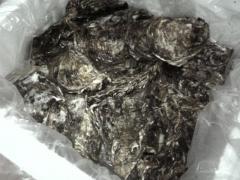 牡蠣  生