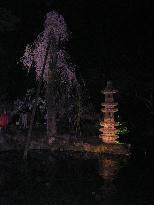 20070411190103.jpg