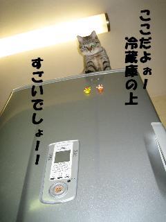 kn20081 004
