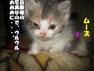 hogoneko2008 011