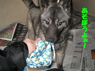 200831dog 001