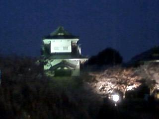 200847hanami4.jpg