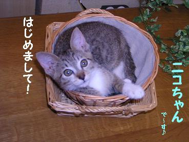 nikokira008.jpg