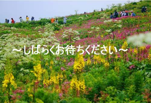 大変見苦しいのでお花畑でお楽しみください