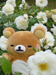 薔薇とリラ