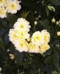 2006-0425-1251.jpg