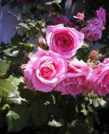 2006-0525-1052.jpg