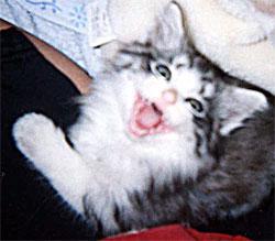 猫ブログもよろしくね。