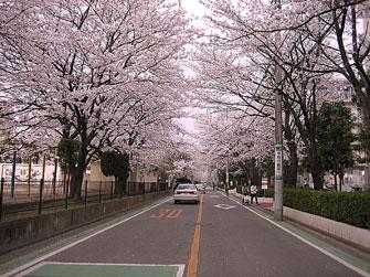 桜2007