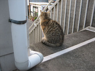 猫 MIX