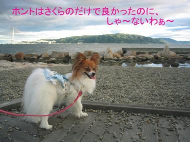 okura2sakura01.jpg