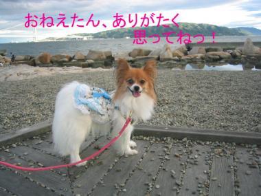 okura2sakura11.jpg
