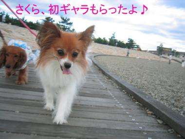 okura2sakura21.jpg