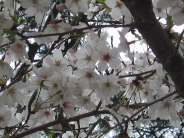 syukugaea1.jpg