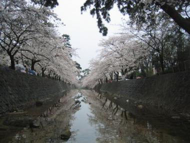 syukugawa3.jpg