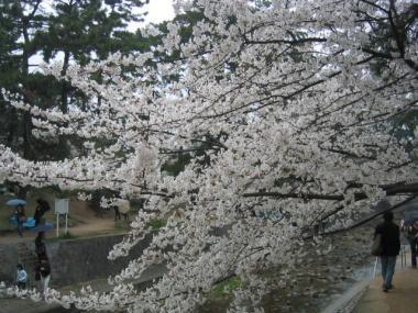 syukugawa5.jpg