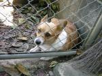 檻の中の犯人