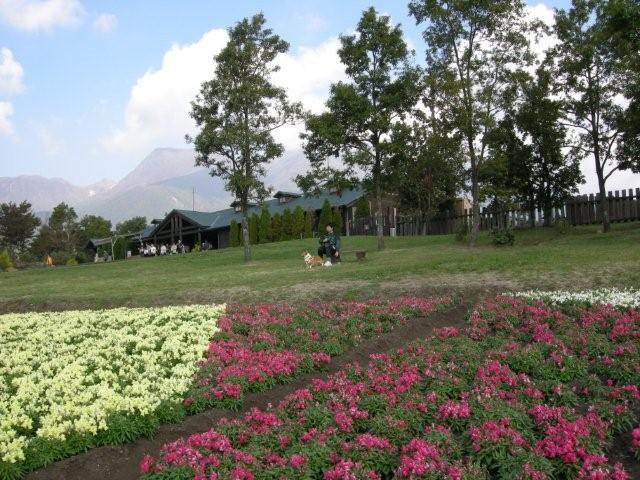 花公園(1)