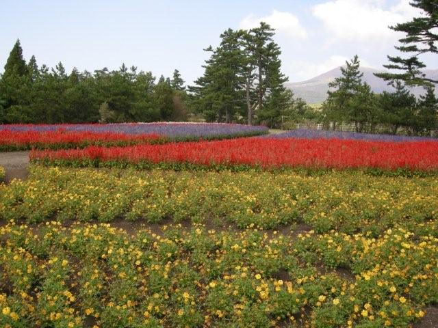 花公園(2)