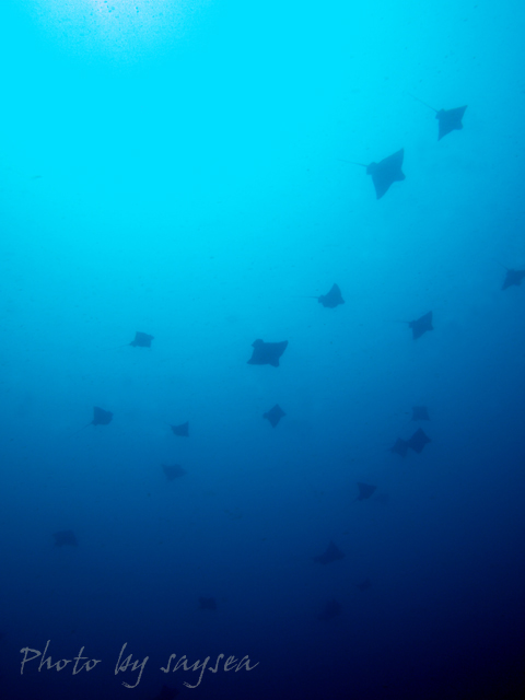 2008tobiei.jpg