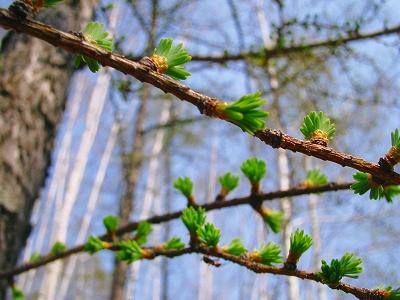 新緑な季節