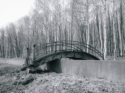 森へとかかる橋