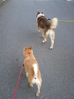 でかおと散歩