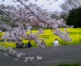 2007年お花見♪