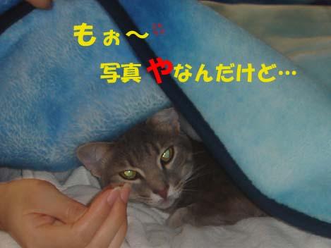 060124Bed3.jpg