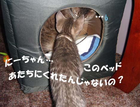 060427shionkurumi7.jpg
