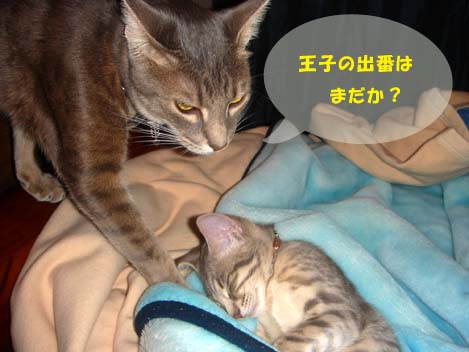 060516shionkurumi.jpg