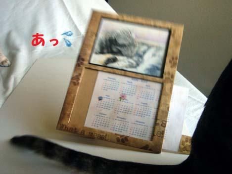 060610shionkurumi3.jpg