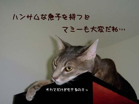 060718shion.jpg