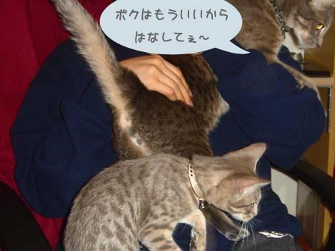 060721shionkurumi3.jpg