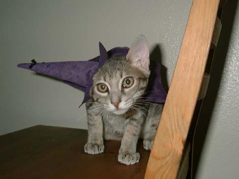 HalloweenShion1.jpg