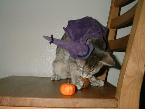 HalloweenShion2.jpg