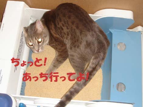 cyoto.jpg