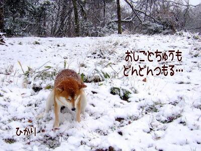 容赦ない雪…(笑)
