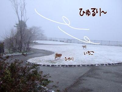 雪、横向きに降ってるんだよ~