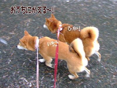お車へ急げ~!!