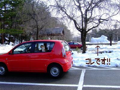 お車の奥のひかりもカメラ目線よっ