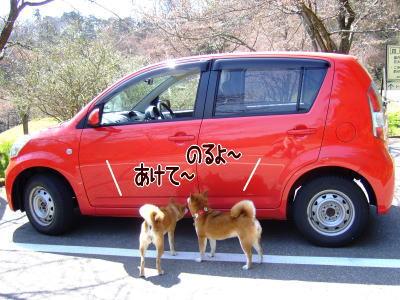お車、ピカピカに見えるなぁ…(笑)