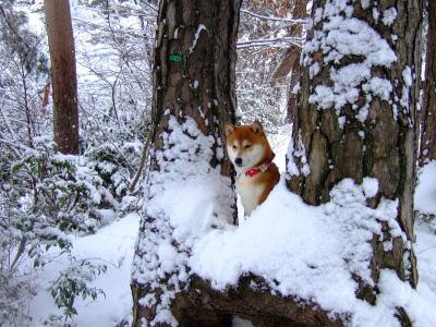 雪の精みたい★