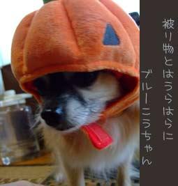 20071101-kouhouse-009.jpg