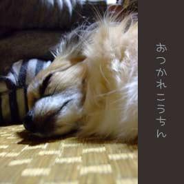 20071101-kouhouse-033.jpg